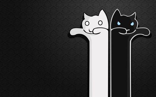Обои Кошки (черная и белая)