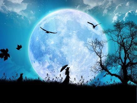 Обои Прогулка под луной