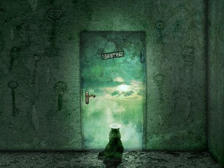 Обои Кот сидит перед дверью с надписью ЗАВТРА, за дверью прекрасный мир, но ключей от двери множество...
