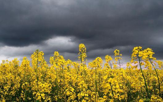 Обои Яркие цветы на фоне пасмурного неба