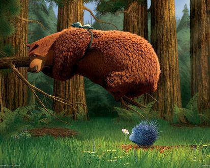 Обои Медведь в лесу чуть не сел на ежика, который мечтательно нюхал цветочек (м / ф Сезон охоты)