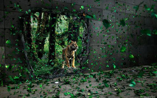 Обои Тигр (В стене, отгораживающей Город от Леса, образовалась брешь, сквозь которую в Город  проникают жители Леса)