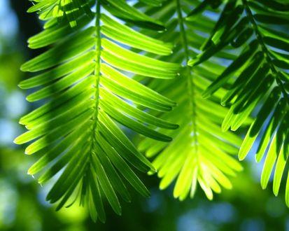 Обои Солнышко сквозь листья