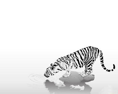 Обои Тигр на водопое