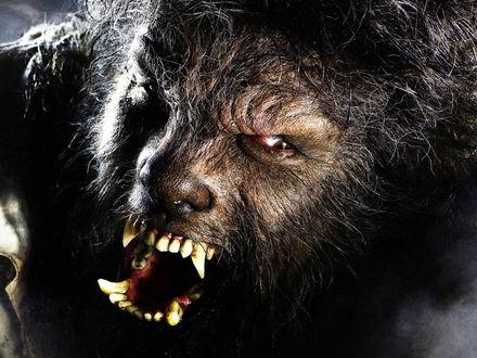Обои Кадр из фильма «Человек-волк»