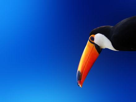 Обои Голова экзотической птицы на синем фоне