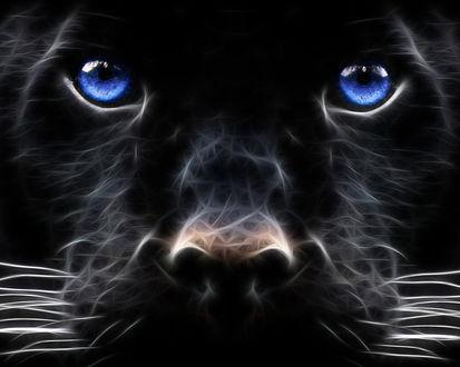 Обои Собачья морда из сгустков энергии с голубыми глазами