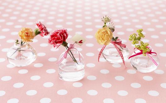 Обои Цветы в отдельных баночках, с бантиками, гвоздики