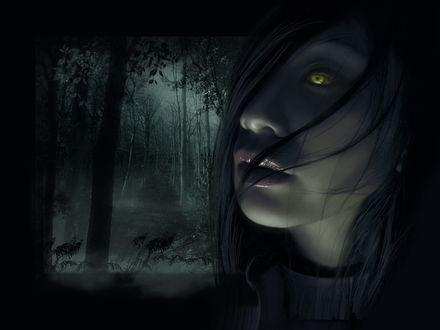 Обои Темный лес