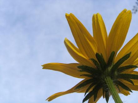Обои Цветочек, вид снизу