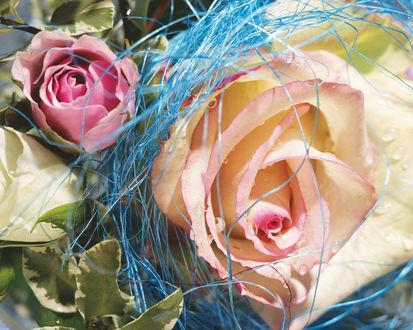 Обои Розы в оформлении