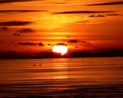 Обои Закат солнца, тихие волны на море, два лебедя плывущие по водяной глади
