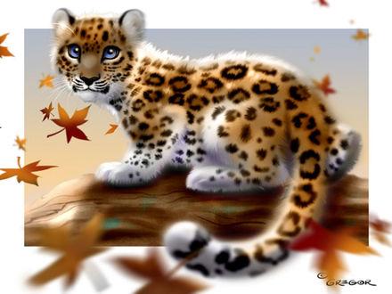 Обои Маленький леопард