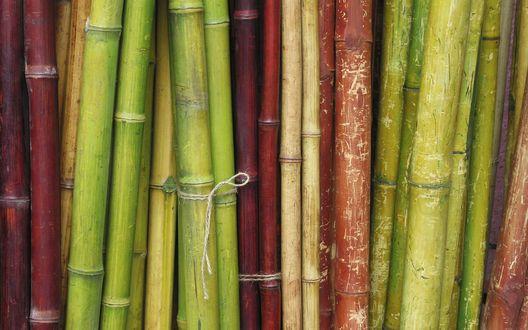 Обои Разноцветный бамбук