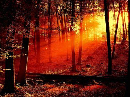 Обои Лес, сквозь деревья пробиваются лучи солнца