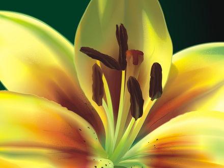 Обои сердцевина лилии