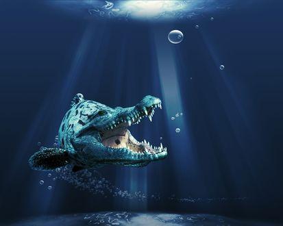 Обои Подводный мир-то ли щука, то ли крокодил