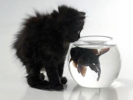 Обои чёрный котёнок с рыбкой