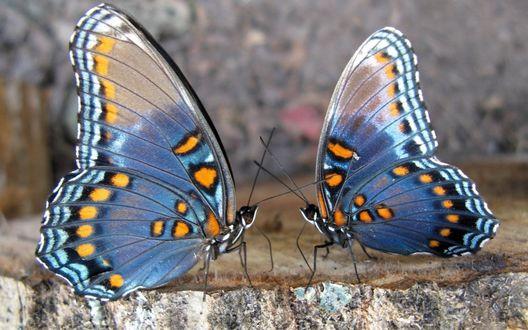 Обои Красивые бабочки беседуют о чём-то своём, о бабском..