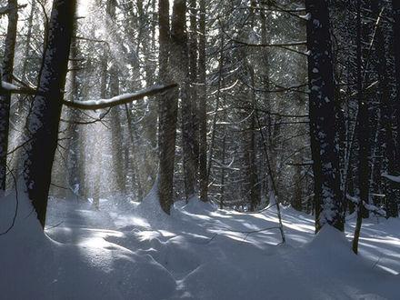 Обои Зимние деревья