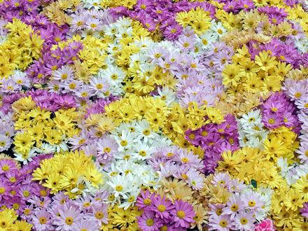 Обои Поляна цветов