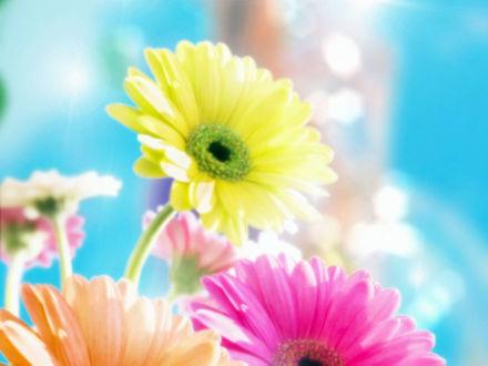 Обои Цветные цветы