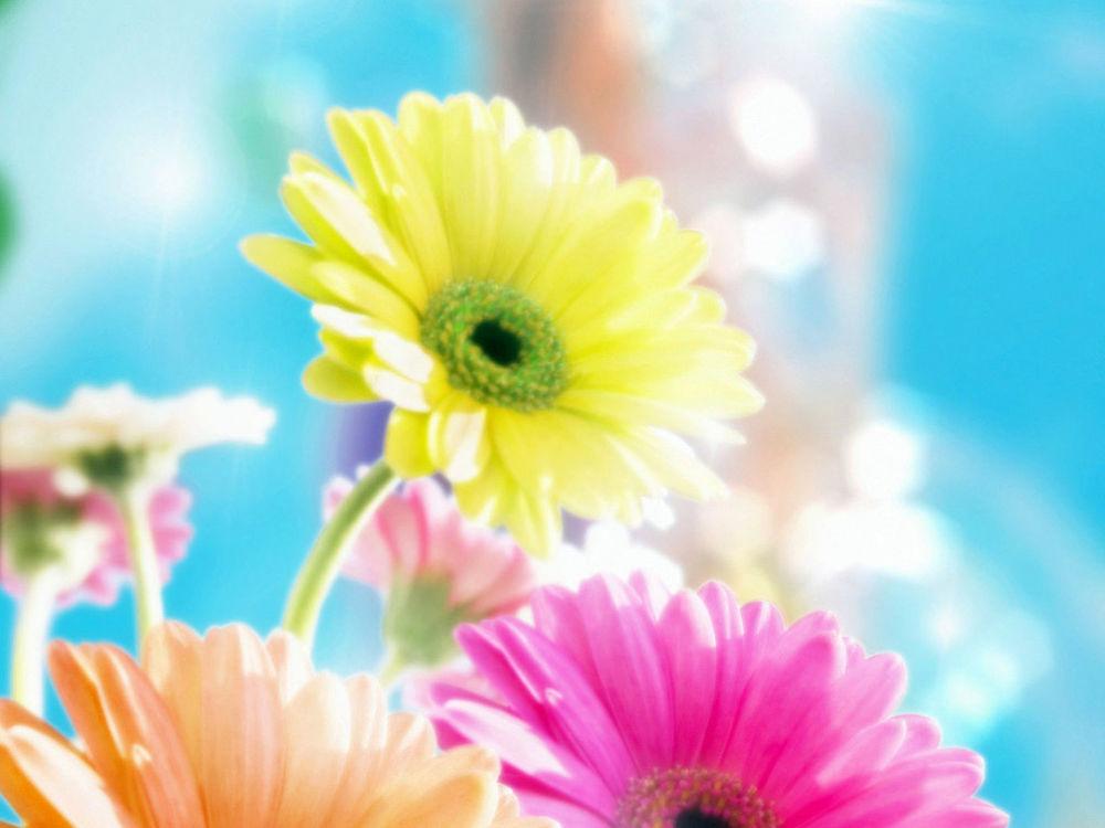 Обои для рабочего стола Цветные цветы