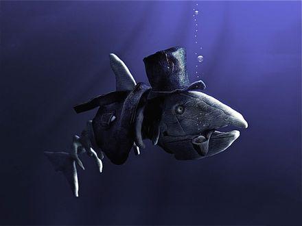 Обои Скелет древней рыбы с трубкой