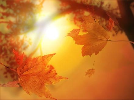 Обои В багрянец и золото оделись леса, Солнце, белые облака и синие небеса... Вокруг такая красота...