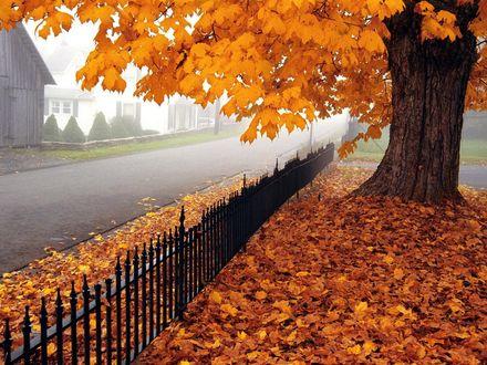 Обои Осенний клен возле дороги