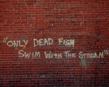 Обои Only dead fish swim with the stream