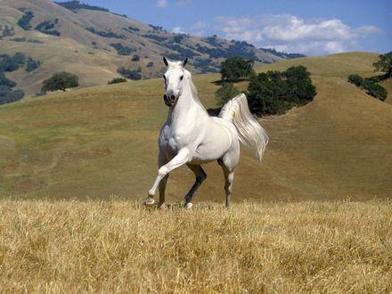 Обои Конь в поле