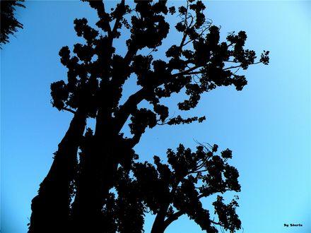 Обои Чёрное дерево на фоне неба