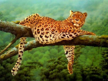 Обои Леопард отдыхает после обеденной трапезы на ветке раскидистого дерева