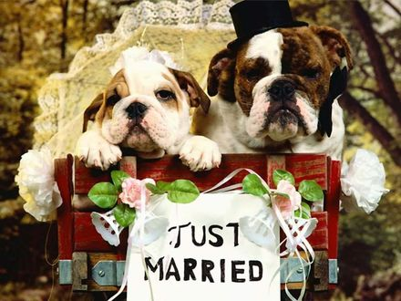 Обои Just Married