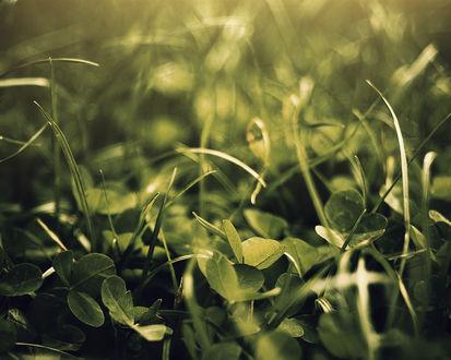 Обои Трава с отблесками солнца