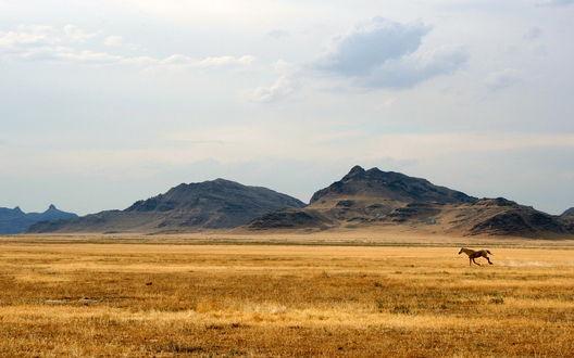 Обои Степь и холмы... бежит одинокий скакун