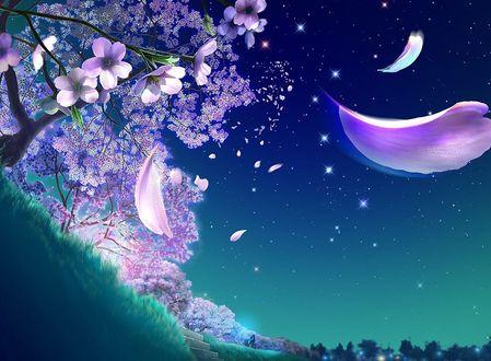 Обои Лепестки, опадающие ночью