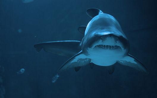 Обои Улыбка акулы