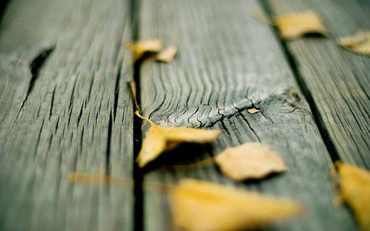 Обои Желтые листья на деревянном полу