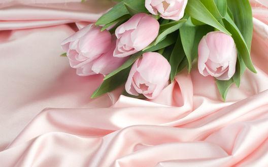 Обои Тюльпаны на розовой ткани