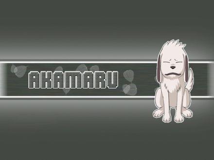 Обои Akamaru (собачка Акамару)
