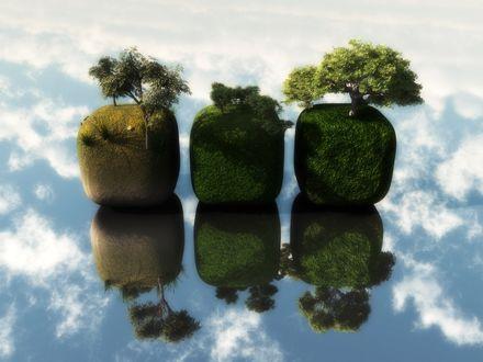 Обои Три куба с деревьями отражаются в воде