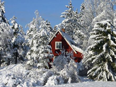 Обои Домик в лесу зимой