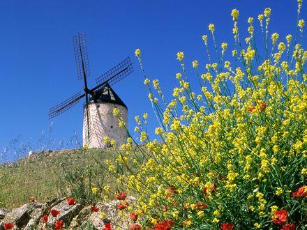 Обои На пригорке стоит ветренная мельница, внизу цветут красные маки