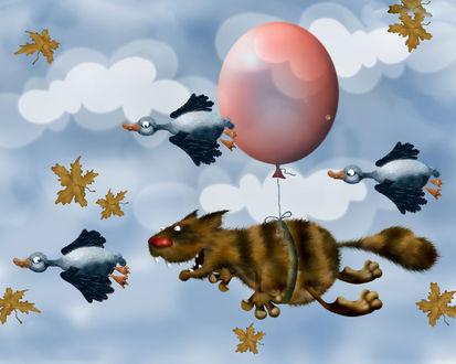 Обои Кот летящий на шарике за утками