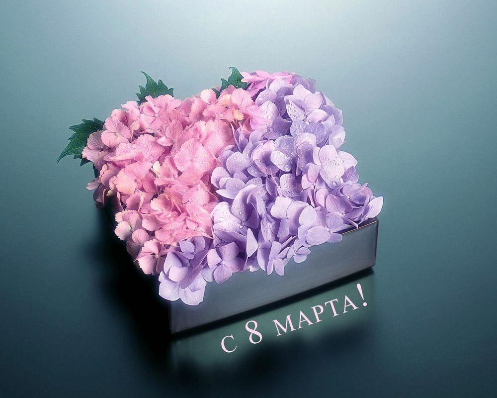 Обои для рабочего стола Цветы на 8 марта. С 8 марта!