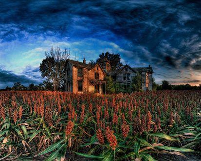 Обои Полуразвалившийся домик посреди полей