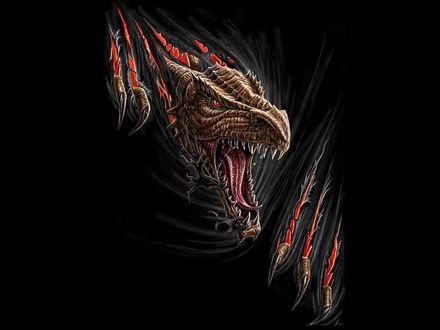 Обои Разъярённый дракон
