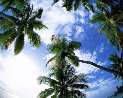 Обои Пальмы